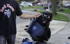 Mr. Sabol and his dog Harley pose in front of their motorcycle.